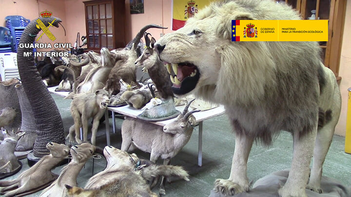 Seizure of stuffed endangered animals