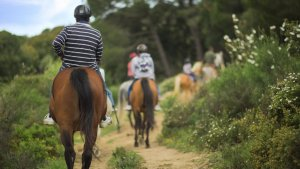 Horse riding in Andalusia.