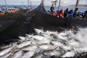 Almadraba Red Tuna fishing around Barbate. (Andalucia.org)