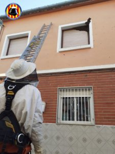 A natural beehive being removed by Valencia firefighters