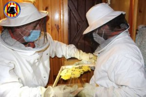 Beehive removal. (Valencia firefighters)