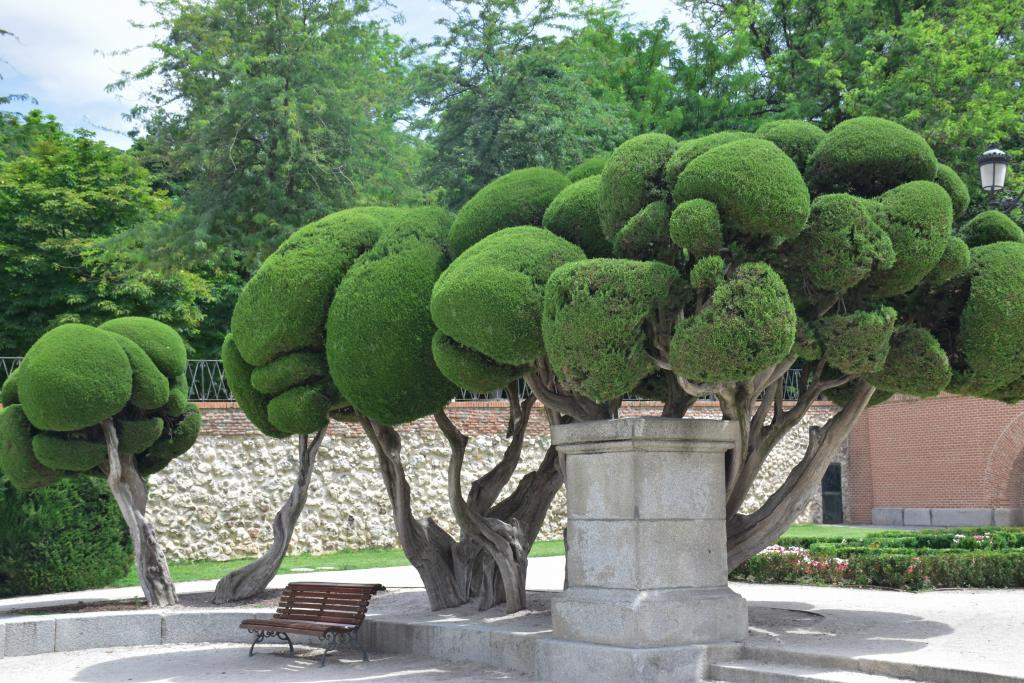 An image of some of the trees in the Retiro Park in Madrid.