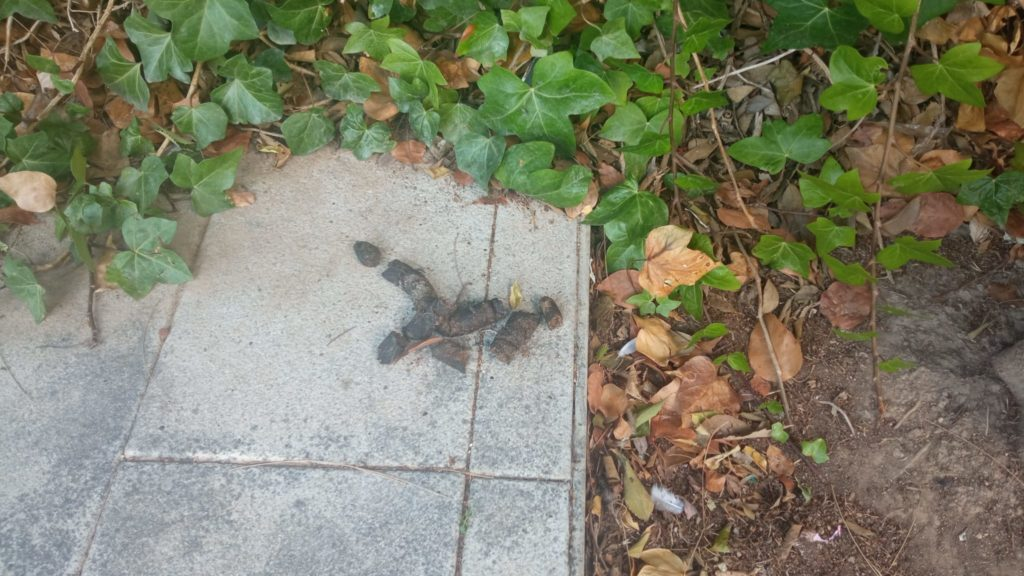 Dog excrement in Carrer Samuel Barrachina in Sitges