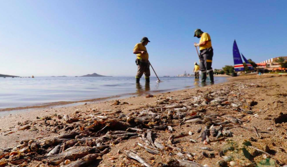 Image of Mar Menor, with dead fish washed up.